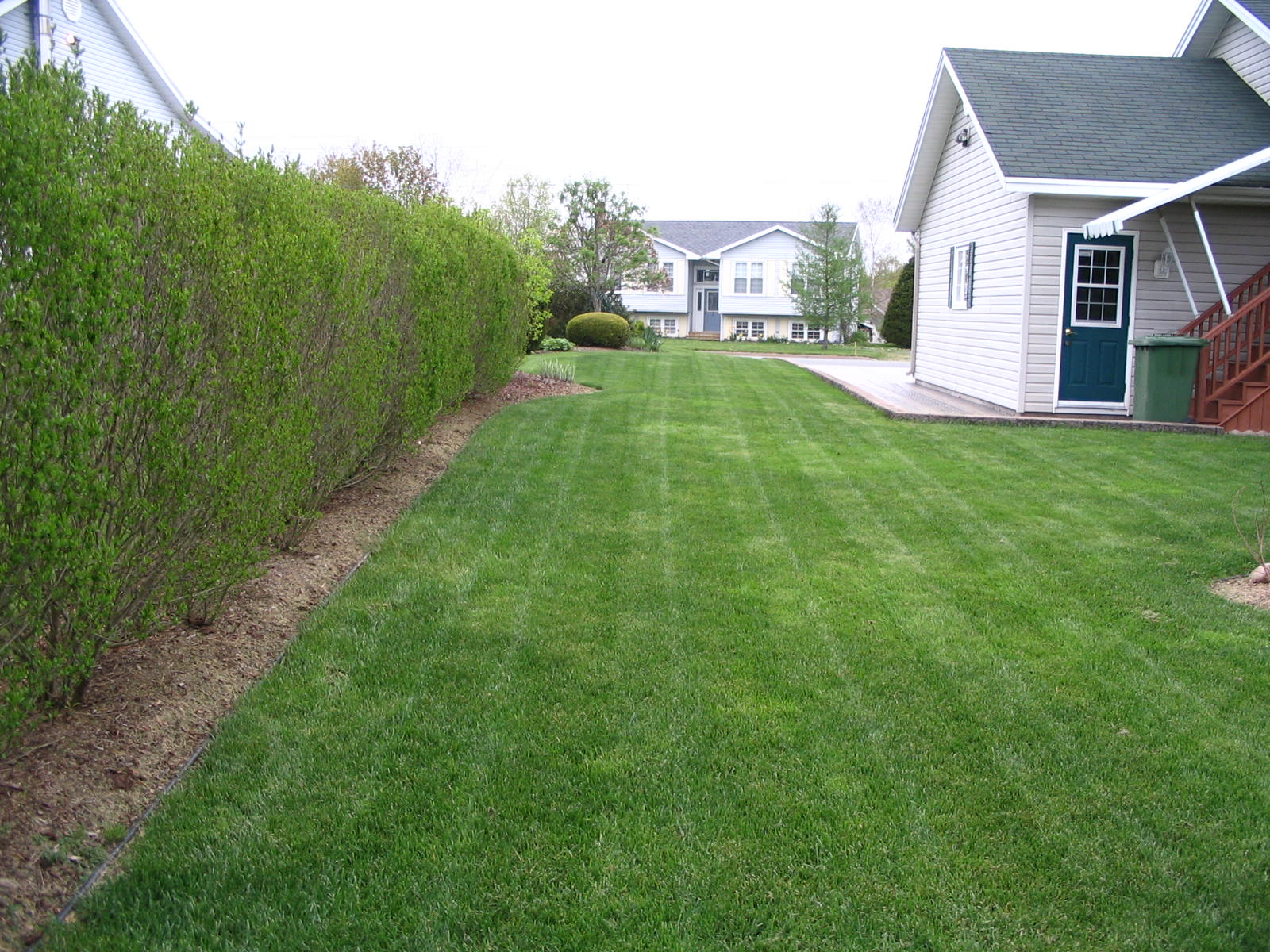 Freshly Mowed Lawn