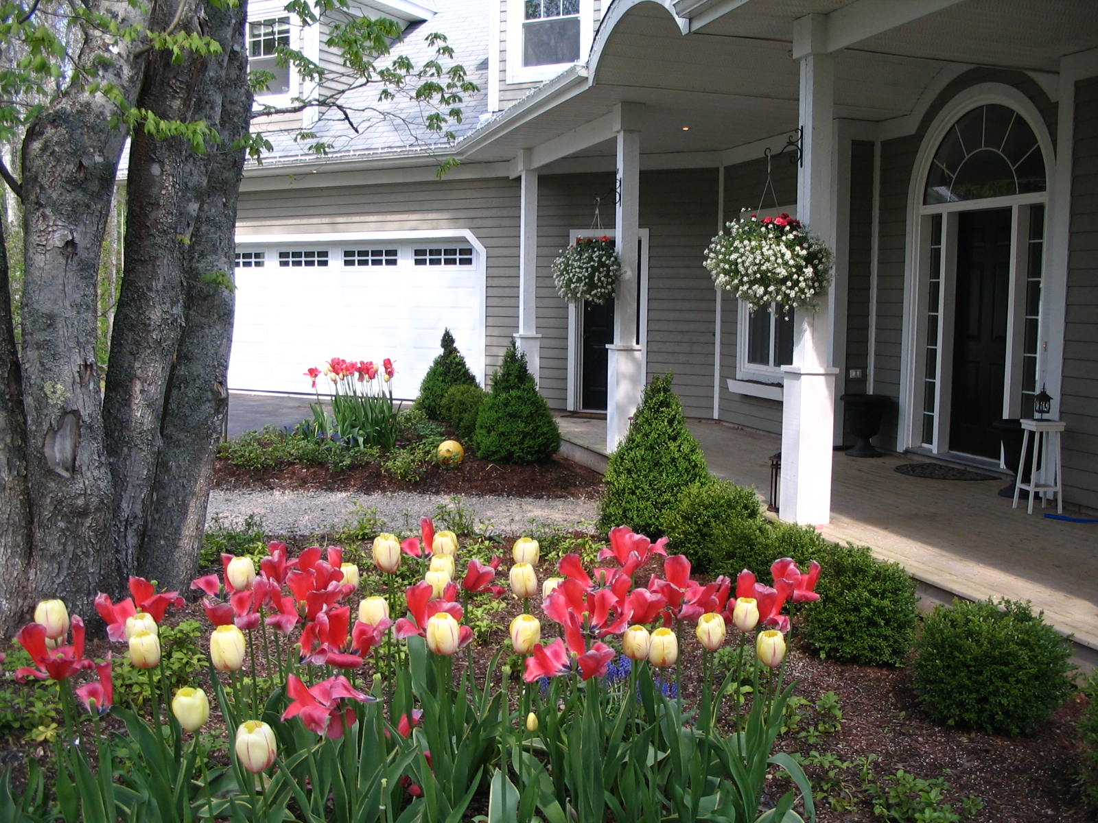 Formal Hedging With Tulips