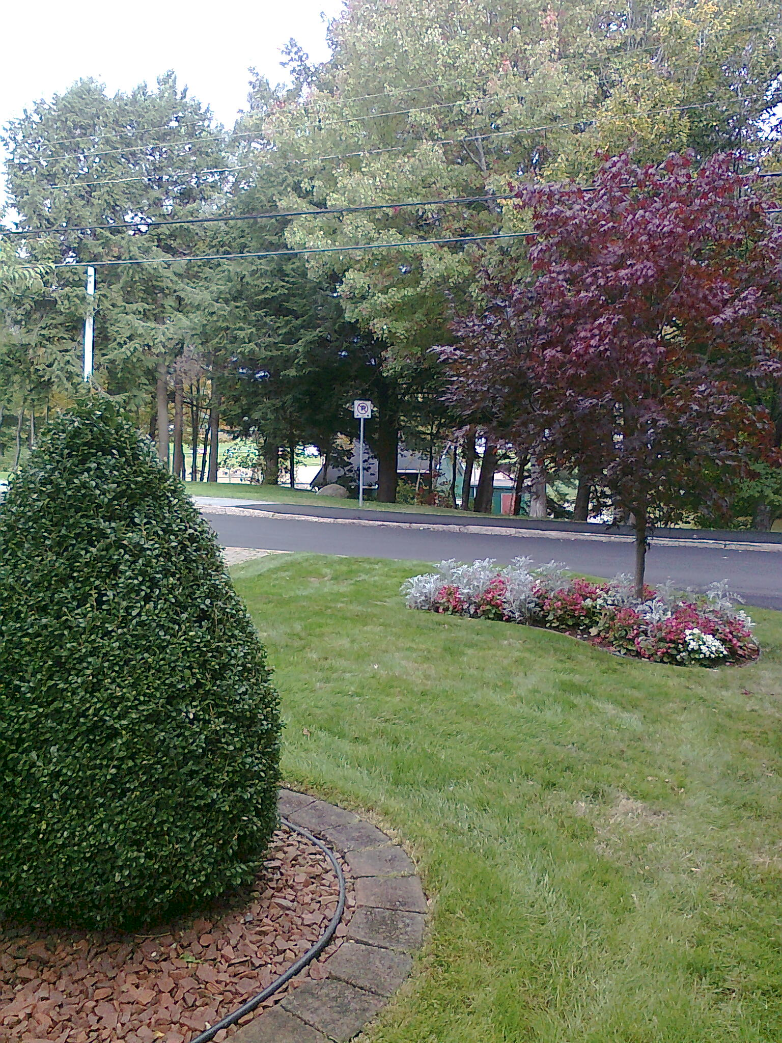 Shrub Pruning & Mowing