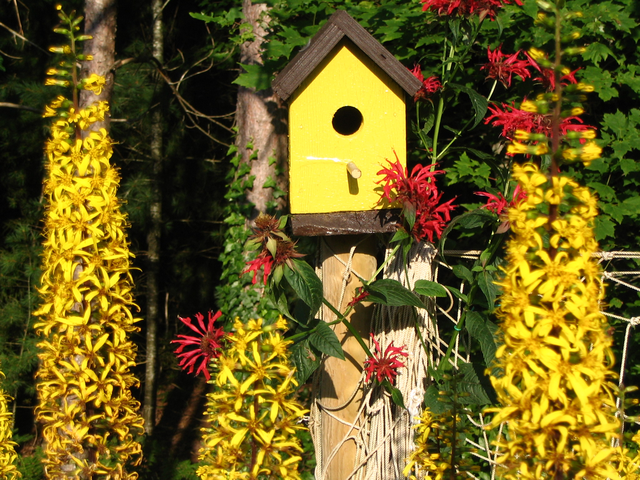Bird House Surrounded By Perennials