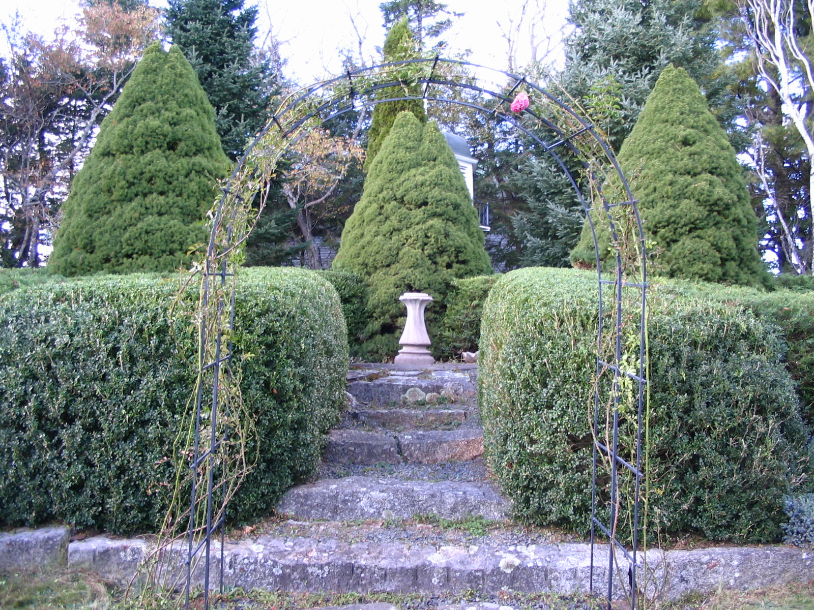 Shrub Pruning